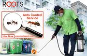 Ants Control Service - Pest Control Company