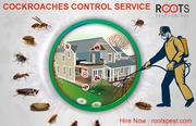 Cockroaches control service - Pest Control Service
